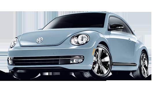 my15_beetle